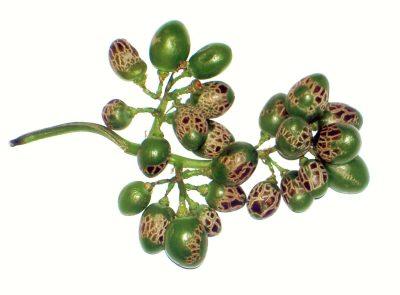 Fitotoxicidad en racimo de uva